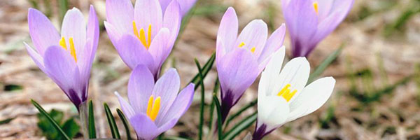 springfest flowers