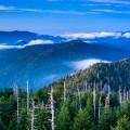 What's New in the Smoky Mountains