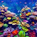 New pearl harbor exhibit at ripley 39 s aquarium for Discount aquarium fish and reef