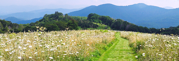 Springtime Hikes In The Great Smoky Mountains