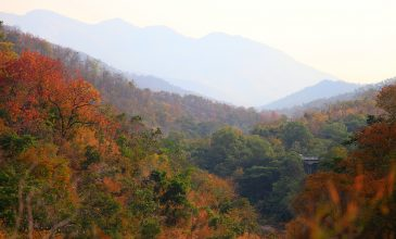 Things to Do in Gatlinburg – Beyond the Cabin
