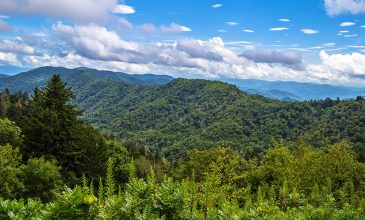 Plan Your Spring Break in the Great Smoky Mountains — Today!