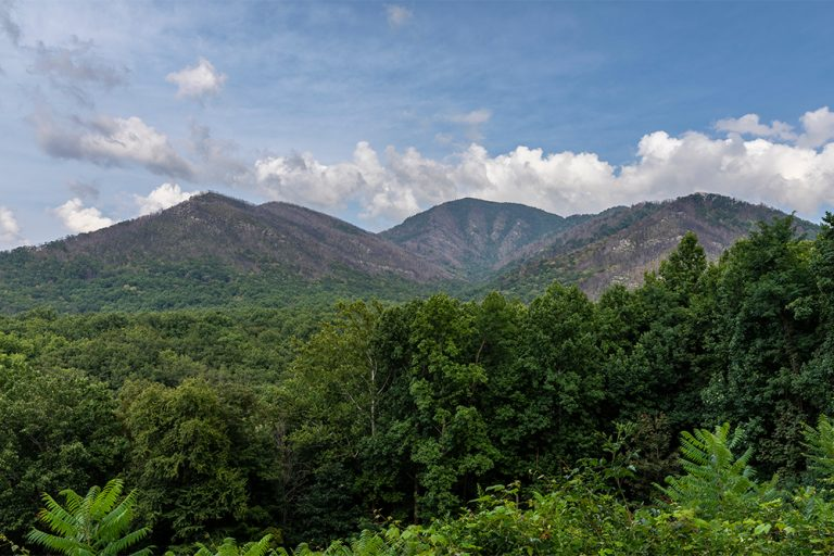 Sustainable Travel: Going Green in the Smokies