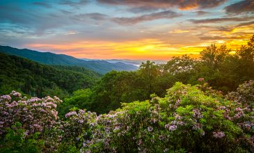 Springtime Events in the Smokies