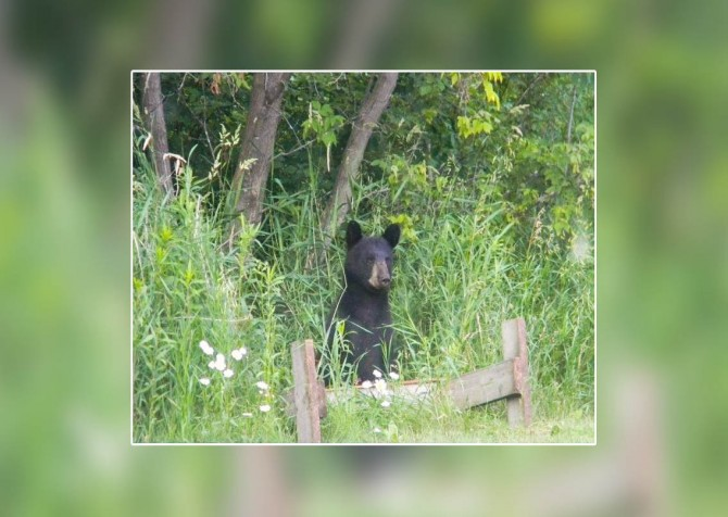 Pigeon Forge Cabin- Alone At Last – Black Bear