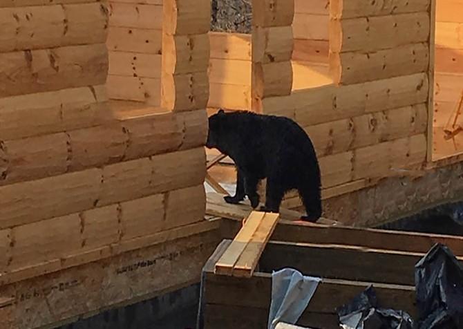 Gatlinburg - Big Bear Views Lodge - Mama Bear at Construction Site