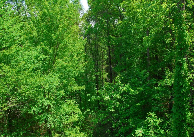 Pigeon Forge - Cedar Forest - View