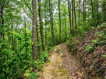 Beside Still Waters Resort - Walking Trail